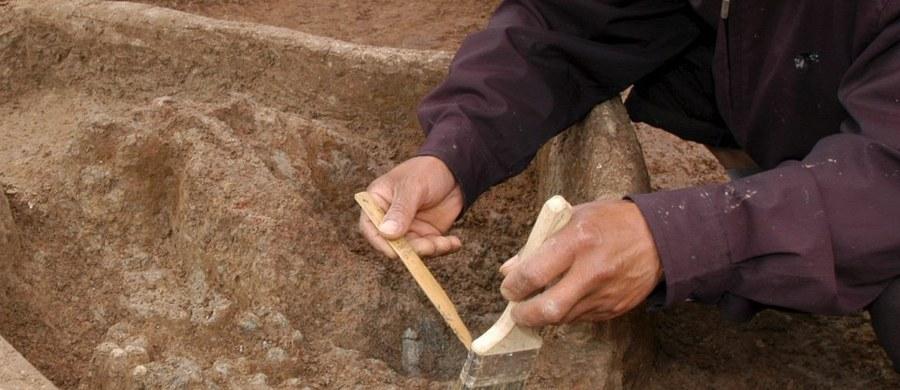 Chcieliśmy odkryć drugi Malbork, a znaleźliśmy... Biskupin - mówią odkrywcy późnośredniowiecznego zamku w Żelechowie w Mazowieckiem. Była to siedziba rodowa możnowładczego rodu Ciołków, do dziś świetnie zachowały się jego drewniane elementy.