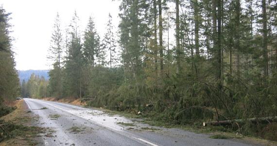 Zerwane przewody energetyczne, powalone drzewa, uszkodzone samochody i dachy. Na Dolnym i Górnym Śląsku, w Beskidach i na Opolszczyźnie mocno wieje! Rządowe Centrum Bezpieczeństwa ostrzegało, że na południu Polski wiatr będzie osiągał lokalnie prędkość do 90 km/h. W Tatrach natomiast szaleje halny. W Śląskiem bez prądu jest ponad półtora tysiąca odbiorców.