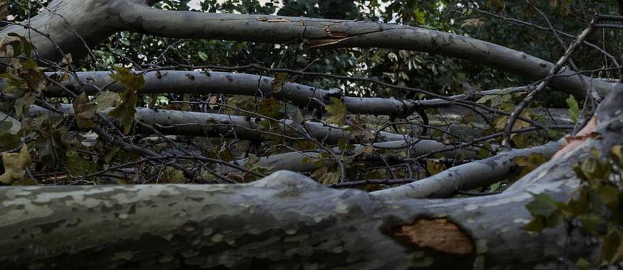 """Półtora miliona metrów sześciennych drzew zniszczonych zostało w lasach w Trydencie, Górnej Adydze i Wenecji Euganejskiej na północy Włoch w wyniku wichur- to wstępna wielkość szkód. Ta rana będzie goić się 100 lat- pisze w piątek """"Corriere della Sera""""."""