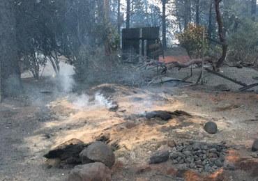Śmiertelne pożary w Kalifornii. Już 83 ofiary