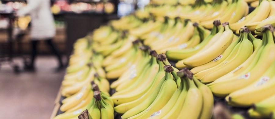 W dwóch kolejnych województwach - na Dolnym Śląsku i w woj. łódzkim -  znaleziono kokainę ukrytą w kartonach z bananami. W sobotę informowaliśmy o tym, że narkotyki schowane wśród owoców odkryli pracownicy sklepu spożywczego w Sokołowie Podlaskim na Mazowszu.