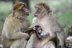 Zakochani są wśród zwierząt