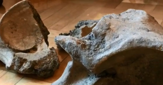 """""""Zaskakujące znalezisko na budowie II linii metra w Warszawie. Przy stacji metra C08 Płocka na Woli odnaleziono kości prehistorycznego ssaka. Ich wiek datuje się wstępnie nawet na 100-120 tysięcy lat"""" - taką informację przekazało biuro prasowe warszawskiego metra."""