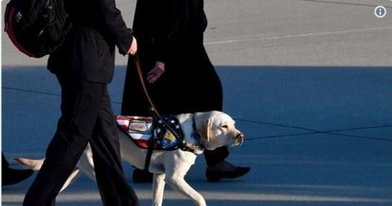 Sully - beżowy labrador, którego zdjęcie pokazujące jak czuwa przy trumnie George'a H.W. Busha, obiegło świat - jest w już w Waszyngtonie. Pies przyleciał na pokładzie prezydenckiego samolotu. W Waszyngtonie pożegna swojego pana. Zwierzę - zostało wytrenowane tak, żeby pomagać osobom chorym, głównie weteranom.