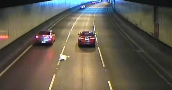 Niebezpieczne zdarzenie w tunelu drogowym w Melbourne. Pies wyskoczył z samochodu wprost na ruchliwą ulicę. Refleks kierowców sprawił, że zwierzak nie został przejechany. Właściciel psa zatrzymał się i wziął go z powrotem do auta. Ruch został przez to zdarzenie na chwilę wstrzymany.
