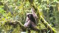 Gibon Skywalkera jednym ze 157 nowych gatunków Azji