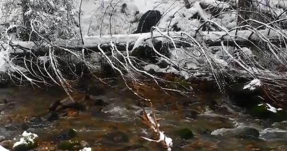 Szczęśliwie zakończyła się nietypowa akcja ratunkowa w Tatrach. Mały niedźwiedź prawdopodobnie wypadł z gawry i spadł po stromym stoku do potoku w Dolinie Kościeliskiej. Film z miejsca zdarzenia dostaliśmy od naszego słuchacza na Gorącą Linię RMF FM.