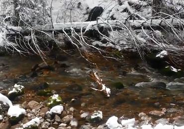 Nietypowa akcja ratunkowa w Tatrach. Mały niedźwiedź nie mógł się wydostać z potoku