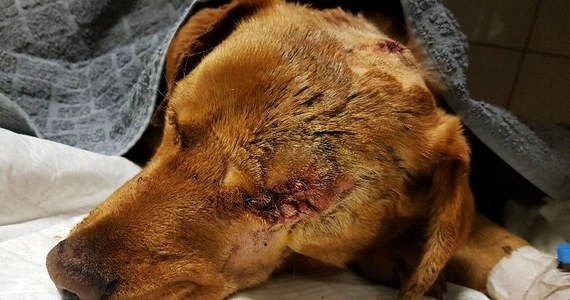 Policjanci z Nowej Soli poszukują zwyrodnialca, który skatował i pozostawienia na śmierć młodego psa. Oprawca okaleczone zwierzę zakopał żywcem w lesie. Piesek został uratowany dzięki czujności mieszkańca i jego fantastycznego psa o wdzięcznym imieniu Aleks.