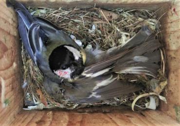 Klimatyczna wojna... ptaków