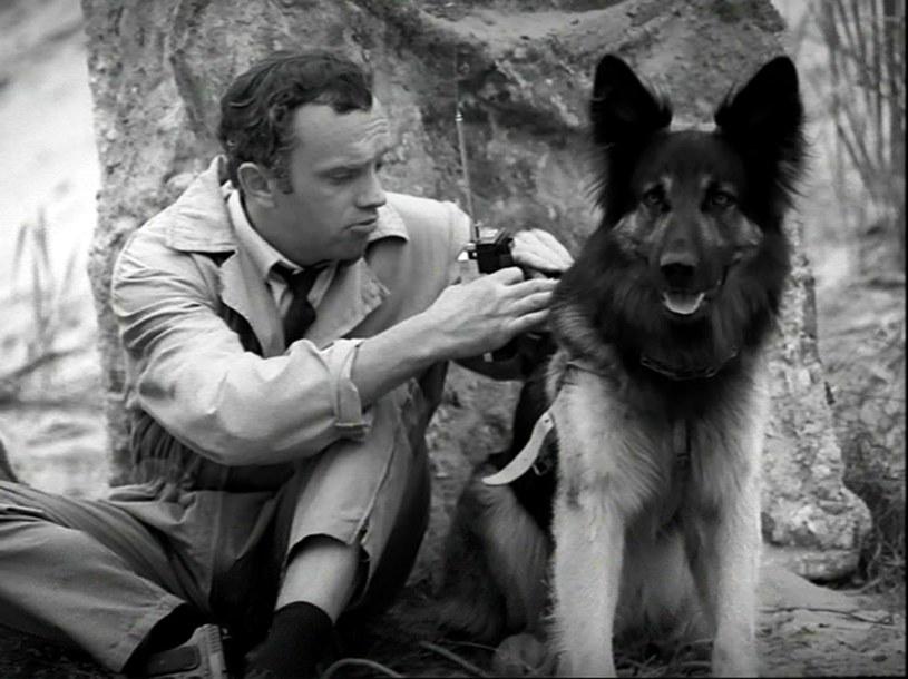 """Nie ma się co oszukiwać – lubimy, kiedy bohaterem filmu bądź serialu jest pies. Potwierdza się to od początku, od sławy Szarika z """"Czterech pancernych i psa"""", który szybko doczekał się następcy w """"Przygodach psa Cywila""""."""