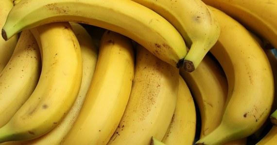 W jednym z warszawskich supermarketów na Mokotowie klienci wśród bananów znaleźli wielkiego pająka - informuje portal metrowarszawa.pl.