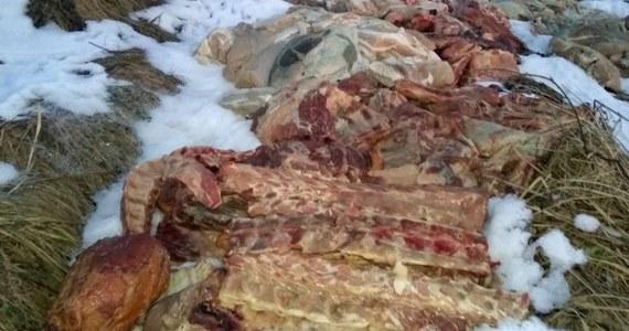 Ogromne ilości mięsa znaleziono na nieużytkach rolnych w okolicach Libiąża niedaleko Chrzanowa w Małopolsce. Policję poinformował jeden z mieszkańców. Zdjęcia mięsa wyrzuconego w okolicach Libiąża opublikował Przelom.pl - Portal Ziemi Chrzanowskiej.