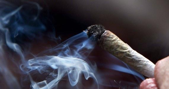 """Kontakt z marihuaną w nastoletnim wieku może znacząco zwiększać ryzyko depresji i myśli samobójczych u młodych dorosłych - piszą w przeglądowej pracy na łamach czasopisma """"JAMA Psychiatry"""" naukowcy z McGill University i University of Oxford. Kanadyjscy i brytyjscy badacze przeanalizowali wyniki 11 badań obejmujących w sumie ponad 23 tysiace osób. Okazuje się, że osoby, które zażywały marihuanę w wieku do 18 lat wpadają w depresję w wieku od 18 do 32 lat o blisko 40 proc. częściej, niż te, które marihuany nie próbowały. Choć praca wskazuje tylko na możliwe powiązanie jednego zjawiska z drugim i nie daje bezspornych dowodów na to, że związek ten ma charakter przyczynowo-skutkowy, autorzy twierdzą, że sprawy nie wolno bagatelizować. Ich zdaniem, państwa powinny opracować strategie, które pozwolą zmniejszyć odsetek nastolatków, którzy mają z preparatami z konopi indyjskich kontakt."""