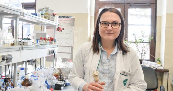 Jedne związki chemiczne zmienia w inne, które być może w przyszłości pomogą w leczeniu nowotworów. Do specjalnej biotransformacji używa grzybów, które można znaleźć w jaskiniach na Dolnym Śląsku. Wkrótce, Ewa Kozłowska z Uniwersytetu Przyrodniczego we Wrocławiu wyniki swoich badań zaprezentuje na Międzynarodowej Wystawie Wynalazków w Genewie.