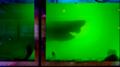"""Nie żyje, ale nadal jest pod ochroną. Dziwaczny przypadek rekina """"Rosie"""""""