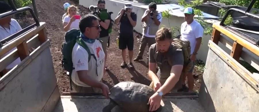 Strażnicy parku narodowego Galapagos znaleźli żółwia z gatunku, który był uważany za wymarły od ponad stu lat. Osobnika odnaleziono na należącej do archipelagu wyspie Fernandina.