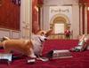Zobacz trailer: Corgi, psiak Królowej