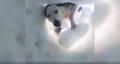 Na ratunek przybył mu pies. Przysypany lawiną nagrał niesamowite wideo