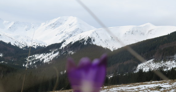 Wypadek w Tatrach: w rejonie Koziej Przełęczy Wyżniej turysta pośliznął się na śniegu i spadł w stronę Pustej Dolinki. Do akcji wysłano śmigłowiec TOPR-u, który zabrał mężczyznę do zakopiańskiego szpitala.