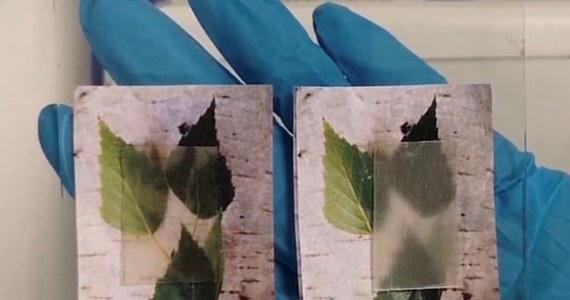 Drewno jest tradycyjnym i niezmiennie popularnym materiałem budowlanym - a szwedzcy naukowcy mają pomysł, jak tę popularność jeszcze zwiększyć. Rozwijają technologię wytwarzania... przezroczystego drewna: ekologicznego materiału, którego właściwości mogą też pomóc w obniżaniu ilości zużywanej energii. Najnowsze wyniki badań ogłosili właśnie w Orlando na Florydzie podczas konferencji American Chemical Society Spring 2019 National Meeting & Exposition.