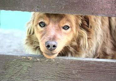 Pies wbiegł na podwórko sąsiada. Ten zabił zwierzę łomem