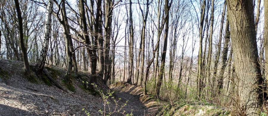 W całej Polsce utrzymuje się trzeci, najwyższy stopień zagrożenia pożarami w lasach. Instytut Badawczy Leśnictwa wydał ostrzeżenie, które obowiązuje do poniedziałku 22 kwietnia.