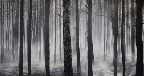 """Strażacy wezwani do pożaru w lesie znaleźli w trakcie gaszenia spalony samochód i nadpalone zwłoki mężczyzny. Takie dramatyczne informacje przekazuje """"Kurier lubelski""""."""