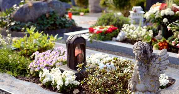Mieszkanka gminy Raszków w Wielkopolsce miała dosyć złodziei kwiatów, które znikały z grobów jej bliskich. Umieściła w wiązance nadajnik GPS, aby w razie kradzieży namierzyć sprawcę. I tak też się stało. Kwiaty zniknęły z grobu 7 maja i jeszcze tego samego dnia zatrzymano 46-letnią kobietę. Grozi jej do 8 lat więzienia.