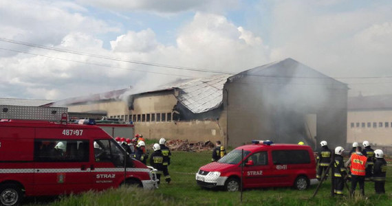 Ciało 62-letniego mężczyzny znaleziono w zgliszczach owczarni w Pianowie k. Kościana w Wielkopolsce. Ogromny pożar wybuchł w hodowli w piątkowe popołudnie, w kulminacyjnym momencie z ogniem walczyły 32 zastępy strażaków. W nocy udało im się opanować i dogasić pożar.