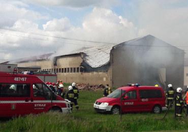 62-letni pracownik zginął w pożarze owczarni w Pianowie. W zgliszczach znaleziono jego ciało