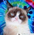 Nie żyje Grumpy Cat, kot słynny z internetowych memów