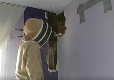 On, ona i 80 000 pszczół. Dwa lata spali z rojem w sypialni