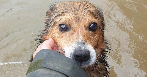 Toną psy w schronisku w Wadowicach Dolnych koło Mielca. Woda przerwała wał i zalewa schronisko. O łódź lub motorówkę, którą można by było przewieźć psy, proszą na Facebooku pracownicy schroniska.