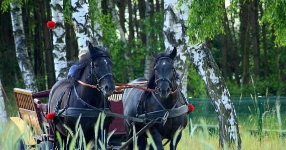 Poważny wypadek w Małopolsce. W Nowej Górze w powiecie krakowskim przewrócił się wóz konny, którym jechały dzieci będące na wycieczce szkolnej. Sześcioro z nich jest rannych.