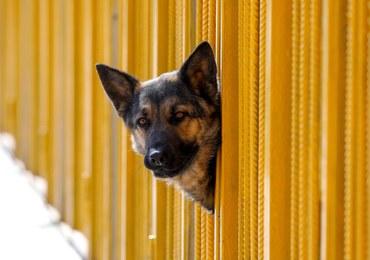 Za zostawianie psa na balkonie kara do pół tysiąca euro