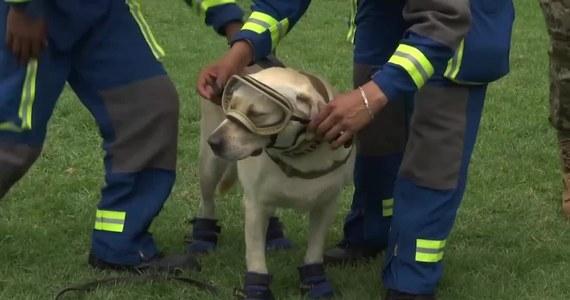 Pies ratowniczy Frida zyskał światową sławę po trzęsieniu ziemi, które w 2017 roku nawiedziło Meksyk. Suka uratowała wtedy 12 osób z zawalonych budynków i zlokalizowała 41 ciał pogrzebanych pod gruzami. Teraz po 9 latach służby w meksykańskiej marynarce wojennej przechodzi na emeryturę.