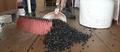 Sceny jak z apokalipsy! Rosyjska wioska przeżywa inwazję much