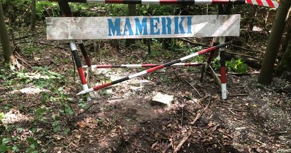 Dzisiaj dowiemy się, czy właz i tunel techniczny, znalezione niedawno w kompleksie bunkrów w Mamerkach koło Węgorzewa na Mazurach kryje coś ciekawego. Rosnące przy włazie drzewo i gruba warstwa ziemi wskazują, że to miejsce nie było otwierane od czasów II wojny światowej.
