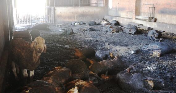 Ponad 500 strażaków walczy w czwartek od rana z dużym pożarem, który wybuchł na terenie katalońskiej prowincji Tarragona w północno-wschodniej Hiszpanii. Żywioł strawił przed południem prawie 6 tys. hektarów lasów i terenów rolnych.