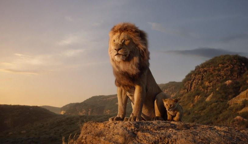 """Twórcy remake'u animacji """"Król Lew"""" zacierają ręce. Według szacunków w weekend otwarcia film może zarobić 150 mln dolarów."""