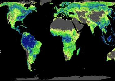 Sadźmy drzewa. Lasy mogą uratować nam klimat!