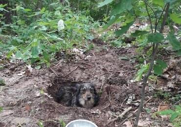 Zakopał żywcem swojego psa. Myślał, że zwierzę nie żyje