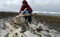 Renifery umierają z powodu zmian klimatycznych