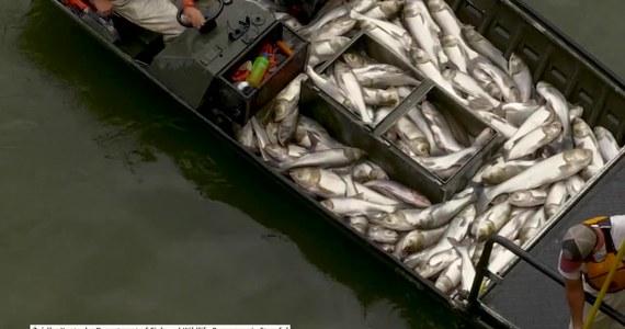 Zespół naukowców z Departamentu ds. Ryb i Przyrody w stanie Kentucky użył prądu, aby ogłuszyć setki karpi azjatyckich w pobliżu zapory Barkley na Jeziorze Kentucky. Zdarzenie miało miejsce na Grand Rivers w Kentucky, USA. Rażone prądem ryby wyskoczyły z wody, a naukowcy złapali je przy pomocy podbieraków i umieścili na swojej łodzi. Zwierzęta mają posłużyć do badań koniecznych przy budowie bioakustycznego ogrodzenia, regulującego swobodne przemieszczanie się gatunku po akwenach wodnych. Według władz, karp azjatycki zagraża przemysłowi rybnemu w regionie, ponieważ jego obecność znacząco zmniejsza ilość pożywienia dostępnego dla lokalnych gatunków ryb.