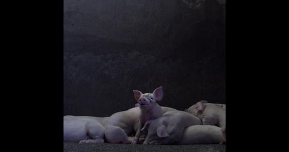 """""""Hodowla, żywność, ekologia"""" - to temat szóstego dnia trwającego w Krakowie festiwalu filmów ekologicznych. Seanse umili degustacja! Podczas pokazów filmowych będą rozdawane darmowe wegańskie hot-dogi od Ikei."""