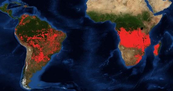 Nie tylko Amazonia i Arktyka boryka się z ogniem, w mediach społecznościowych - przede wszystkim na Twitterze - pojawiają się głosy, że największe skupiska pożarów widoczne są także na południu Afryki.