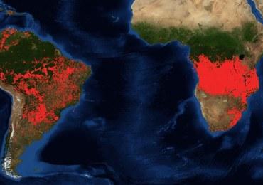 Dramatyczna sytuacja na południu Afryki. Pożary sieją spustoszenie