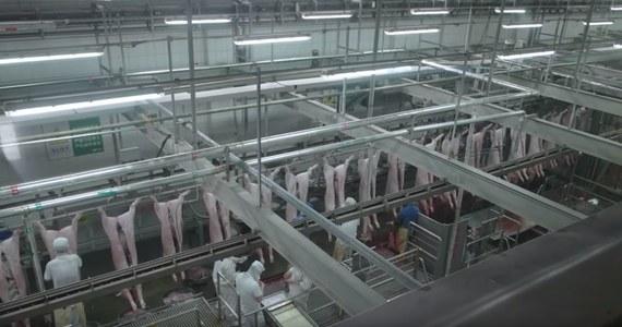 """Nasz konsumpcyjny styl życia staje się problemem. Jeśli każdy z nas chce jeść 100 kg mięsa rocznie, to tego nie da się w zrównoważony sposób wyprodukować – mówi RMF FM laureat 1. nagrody Kraków International Green Film Festival w kategorii dokument długometrażowy, Enrico Parenti. Autor filmu """"Soyalism"""", o przemysłowej uprawie soi na paszę dla zwierząt hodowlanych, przekonuje, że nie wolno nam jeść tak dużo mięsa, bo to niezdrowe dla nas, szkodliwe dla środowiska i złe dla zwierząt. Jego zdaniem, chciwość rozwija się, bo pozwoliliśmy sobie uważać, że żywność jest i powinna być tania. Tymczasem, jeśli coś jest tanie, powinniśmy zadać sobie pytanie, dlaczego tak jest. Tam muszą być jakieś ukryte koszty. Najczęściej te koszty ponosi środowisko, ludzie, którzy w tym przemyśle hodowlanym pracują, żyjące w niewoli zwierzęta."""
