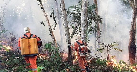 """Papież Franciszek podczas spotkania z wiernymi w Watykanie wezwał wszystkich do modlitwy w intencji Amazonii, gdzie trwają pożary lasów. Przypomniał, że obszar ten jest """"płucem"""" niezbędnym dla całej Ziemi."""